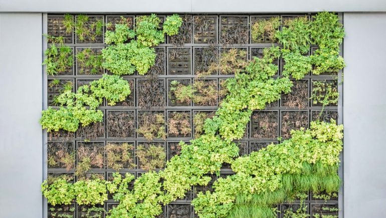 Dos and Don'ts When Building Your Own Vertical Garden