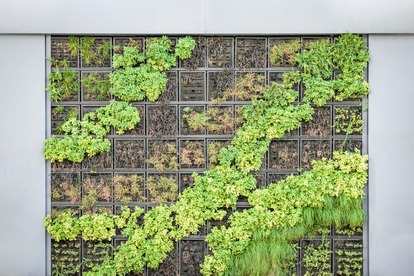 Do It Yourself Home Design: Dos And Don'ts When Building Your Own Vertical Garden