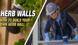 HERB-WALLS-FEATURED-IMAGE