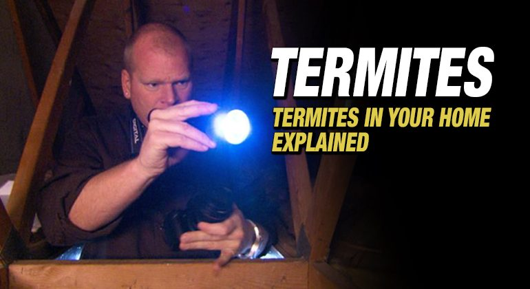 TERMITES-FEATURED-IMAGE-MIKE-HOLMES